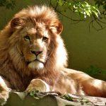 De Leeuw, de Os, de Mens en de Adelaar
