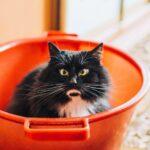 De 'kat' die de emmer deed overlopen